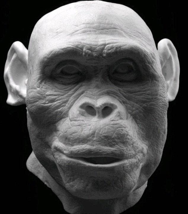 Hộp sọ của Australopithecus – sống cách đây 2 triệu năm được sử dụng để tái tạo lại khuôn mặt