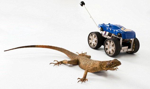 Có thêm đuôi như thằn lằn, robot trở nên linh hoạt hơn.