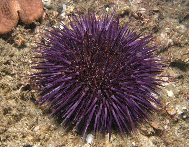 Nâng chất lượng bê tông từ xương sống nhím biển