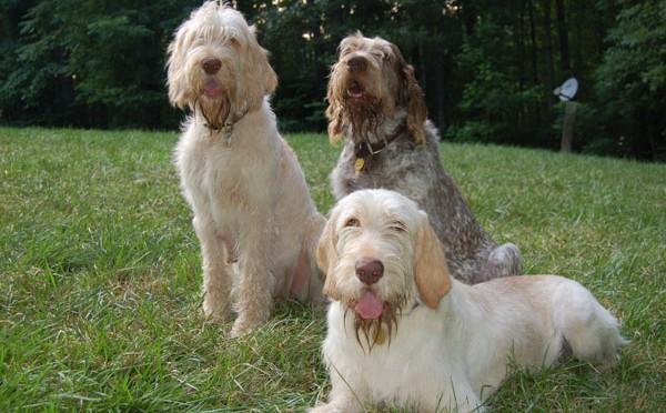 Chó và người nuôi có điểm tương đồng trong tính cách