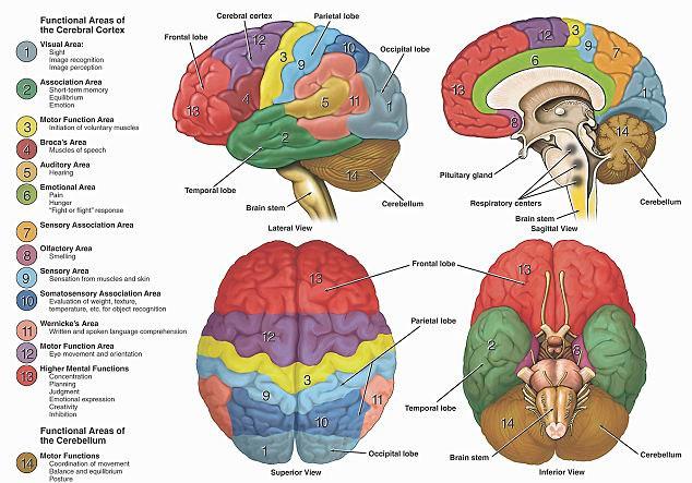 """""""Não máy tính"""" mở ra hy vọng mới về nghiên cứu não người"""
