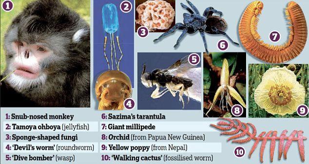 Phát hiện 10 loài sinh vật mới