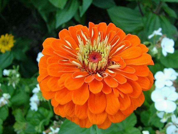 Hoa giúp con người cởi mở hơn