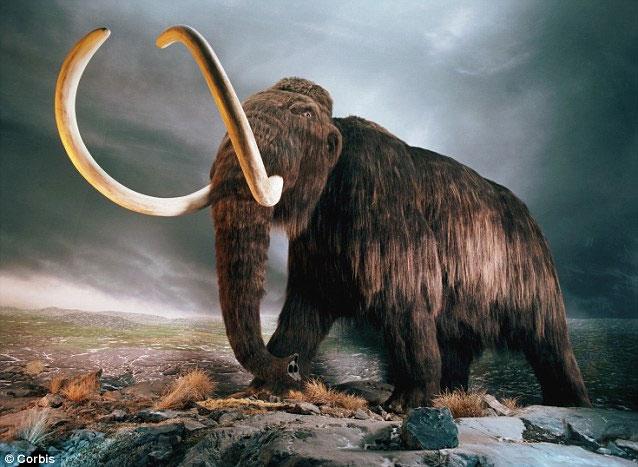 Bão thiên thạch cách đây gần 13.000 năm dường như đã khiến người tiền sử và voi ma mút bị diệt vong.