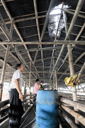 Đường nứt dài 4 mét trên mái chuồng lợn do sét đánh