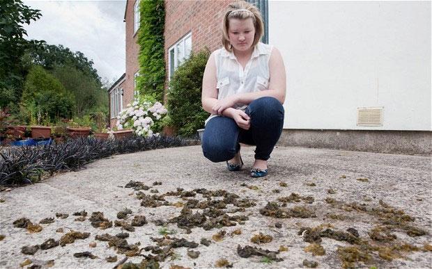 Chị Naomi Sheldon, một người dân địa phương, rất ngạc nhiên khi thấy rong biển rơi trong vườn nhà mình.