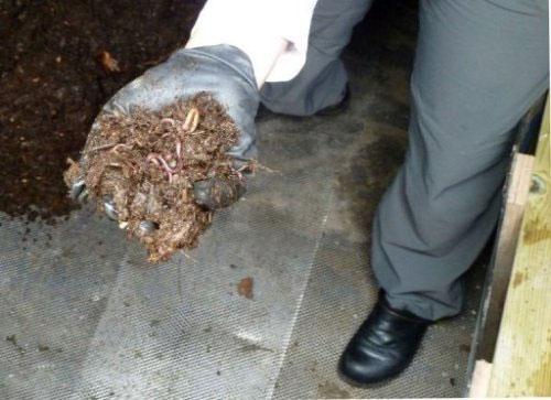 Bà Helene Beaumont cầm trên tay đội quân giun đất đặt dưới sàn toilet khô và không mùi