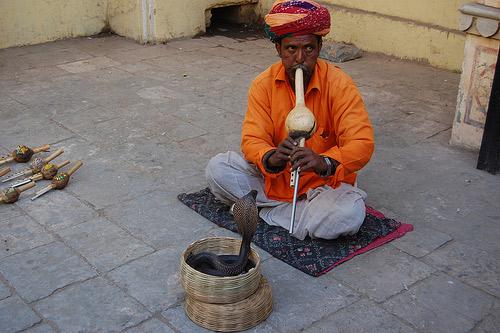 Rắn được xem như là một biểu tượng của sự bất tử ở Ấn Độ.