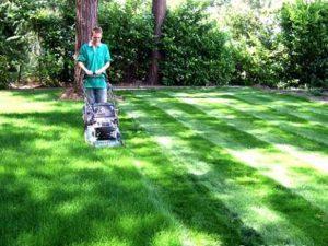 Dịch vụ cắt cỏ, tỉa cây cảnh chuyên nghiệp